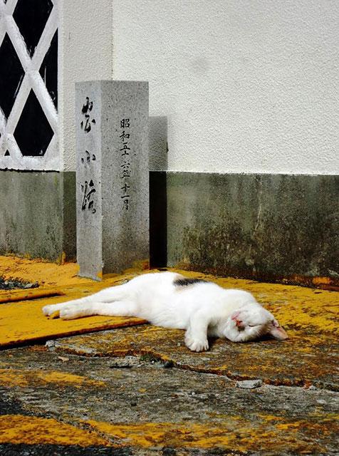 nekomachi_3.jpg